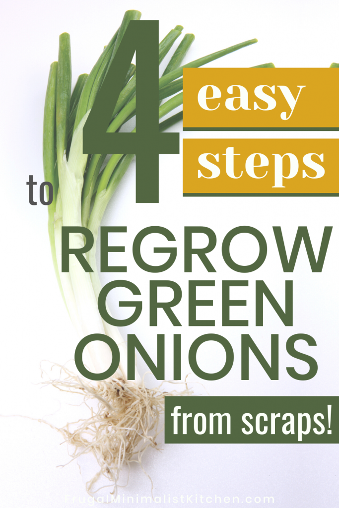 4 easy steps to regrow green onions from scraps